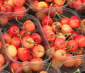 Isle of Wight Cherries